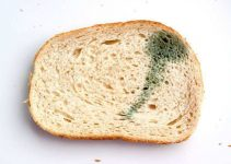 tips to keep bread from moulding