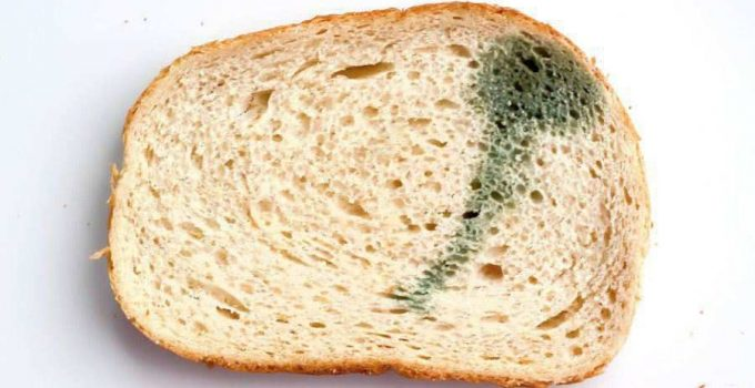 How to Keep Bread from Molding: Top 4 Tips to Keep Bread Fresh for Longer