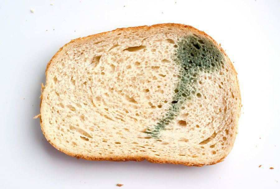 tips to keep bread from molding